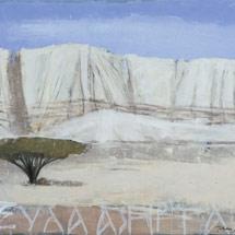 Пустыня Неггев. Дерево Ситтим