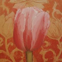 Розовый тюльпан